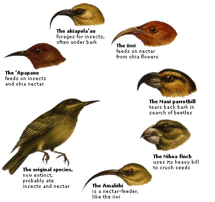 by charles darwin essay natural selection Charles darwin essay sample darwin's evolution theory, expounded by the process of natural selection (survival for the fittest) has drawn a lot of controversy, especially in religious, scientific and/or academic sectors.